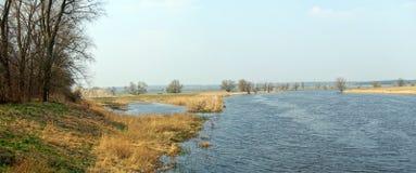 Prés de l'Elbe dans le printemps Willow Trees Photo libre de droits