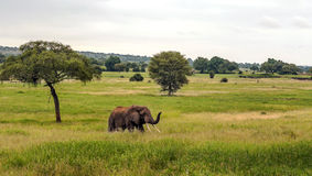 Prés de la Tanzanie photos stock