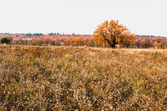 Prés de zone inondable de zone de forêt-steppe photo stock