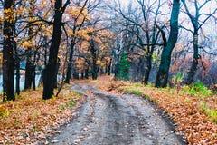 Prés de zone inondable de zone de forêt-steppe photographie stock