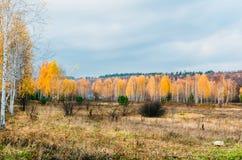 Prés de zone inondable de zone de forêt-steppe images libres de droits