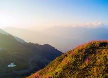 prés floraux de montagne images stock