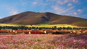 Prés prairie, Hebei, Chine de panorama Photos stock