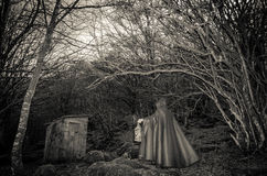 Présence foncée dans les bois Photo libre de droits