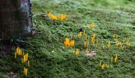 Présences colorées gentilles dans un jardin japonais Photo libre de droits