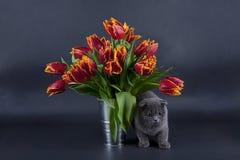 Présent de Kitty Photos stock