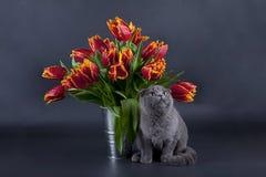 Présent de Kitty Photographie stock