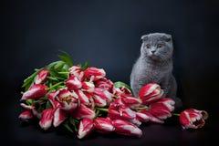 Présent de Kitty Photo libre de droits