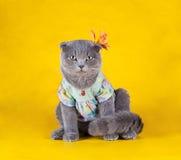 Présent de Kitty Photos libres de droits