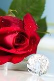 Présent de Rose avec une surprise Photo stock