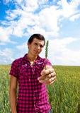 Présentation du blé dans le domaine de blé Photo stock