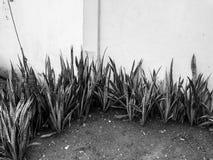 Présentation noire et blanche de fleur par le modèle avant de barrière photographie stock libre de droits