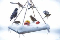 Présentation préparée pour les oiseaux sauvages Photos stock