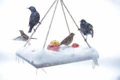 Présentation préparée pour les oiseaux sauvages Photographie stock libre de droits
