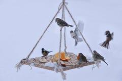Présentation préparée pour les oiseaux sauvages Photo libre de droits
