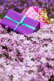 Présents de la carte de voeux deux avec beaucoup de fleurs violettes Images stock