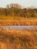 Préservation de la nature l'Illinois de prairie de Wadsworth Images libres de droits
