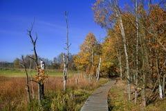 Préservation de la nature Soos près de la petite ville de Bohème occidentale Frantiskovy Lazne Franzensbad de station thermale en Photographie stock libre de droits