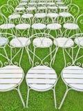 Présidences blanches sur l'herbe verte Photographie stock libre de droits