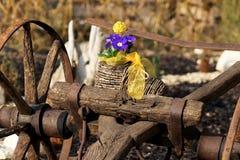 Prímula azul com a trilha velha da oxidação Fotografia de Stock