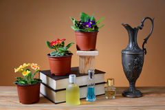 Prímula no vaso, nos livros e em uma garrafa do metal Fotos de Stock Royalty Free