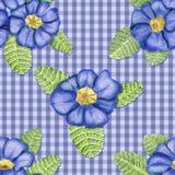 Prímulas en fondo azul Imagen de archivo libre de regalías