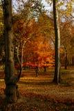 Príncipe Park em Aranjuez Fotos de Stock
