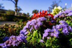 Príncipe Park em Aranjuez Imagens de Stock Royalty Free