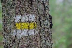 Próba znak na drzewie w lesie Zdjęcie Stock