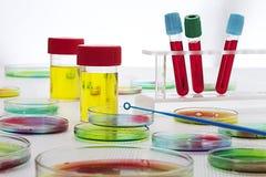 Próbka krwi w próbnych tubkach i Petri naczyniach Obraz Stock