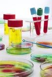 Próbka krwi w próbnych tubkach i Petri naczyniach Zdjęcia Stock
