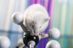 Próby kliniczne w laboratorium zdjęcie stock