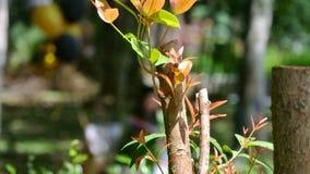 Próxima geração de árvore Foto de Stock Royalty Free