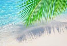 Próximo em folha de palmeira o oceano Imagens de Stock