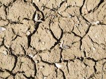 Próximo inferior seco Fotografia de Stock