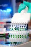 Prövkopiapåfyllning med den multichannel pipetten Arkivbild
