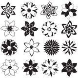 Prövkopior av blommor Arkivfoto