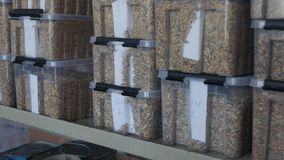 Prövkopior av korn av havren, råg i en behållare för analys eller kvalitets- kontroll stock video
