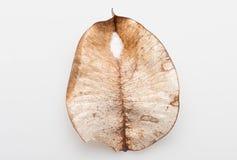 Prövkopiorna av lövfällning arkivfoto