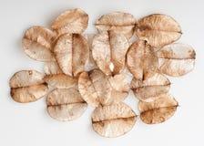 Prövkopiorna av lövfällning arkivbilder