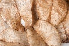 Prövkopiorna av lövfällning arkivbild