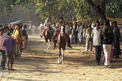 Prüfen Sie Reitpferde bei einem Indien Stockfotos