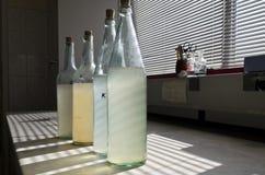 Prüfen Sie Wasserproben im Labor Lizenzfreies Stockbild