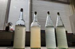 Prüfen Sie Wasserproben im Labor Stockfotografie