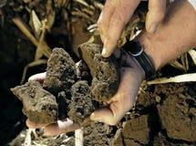 Prüfung der Bodengüte lizenzfreie stockfotos