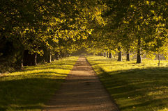 Prążkowana drzewo Aleja Obrazy Royalty Free