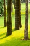 prążkowany drzewo Fotografia Stock