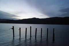 Prącia w jeziorze obrazy royalty free