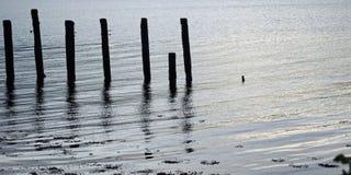 Prącia w jeziorze obrazy stock