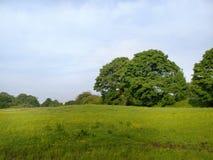 Pré anglais d'été avec des arbres Images libres de droits